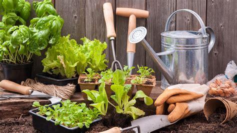 gardening tips      planting todaycom