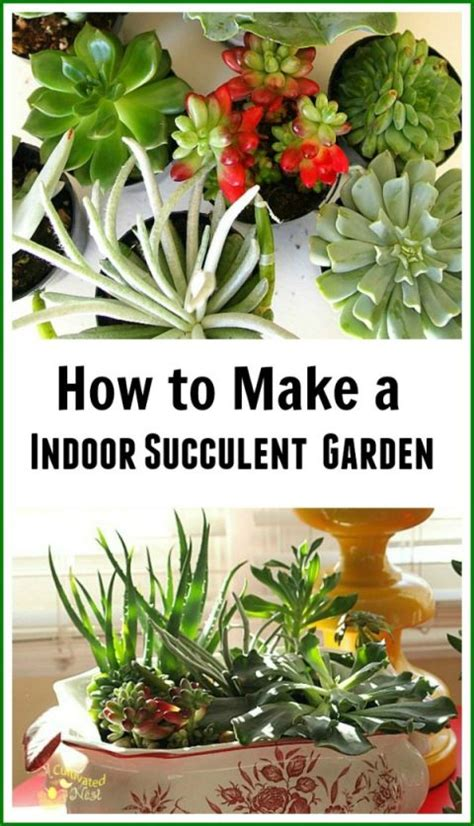 how to make an indoor succulent dish garden gardens