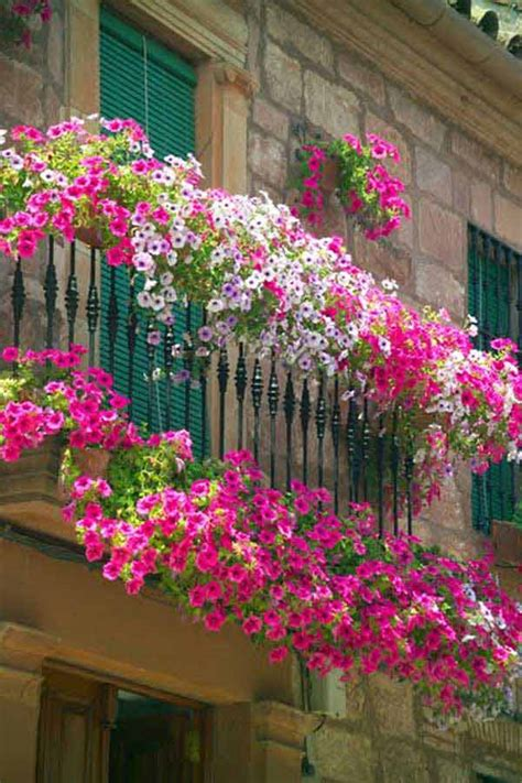 idea fiori decorare il balcone con i fiori 20 bellissimi esempi per