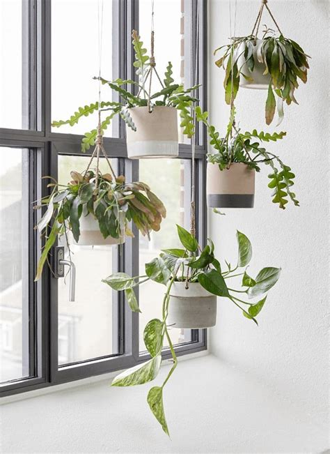 hanging plant create coziness with h 252 bsch aw2015 houseofc hanging
