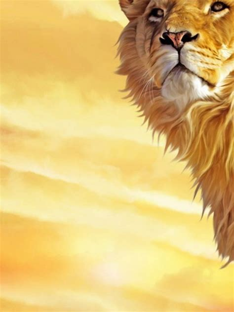 lion background  hd wallpapers hd backgrounds