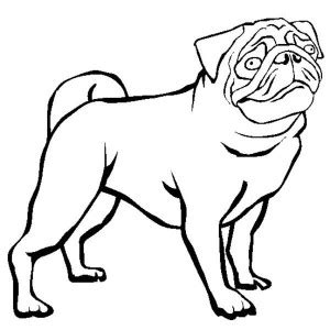 pug outline drawing pug outline clipart best