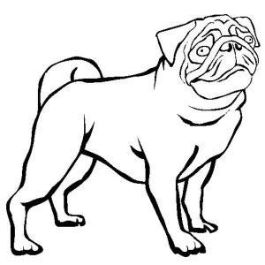 outline of a pug pug outline clipart best