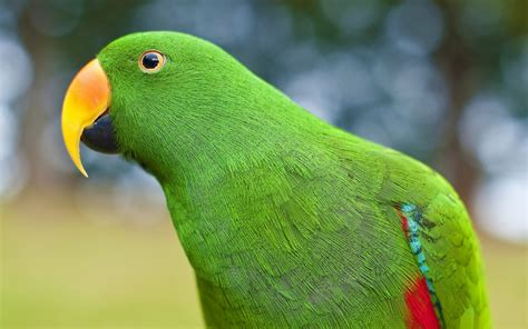green parrot 2560 x 1600 animals photography miriadna com