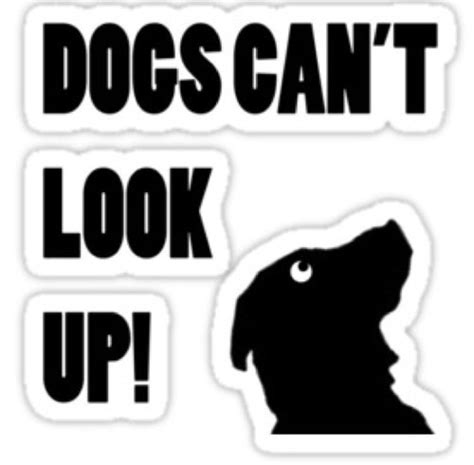 can dogs look up dogs can t look up dogscantlookup1