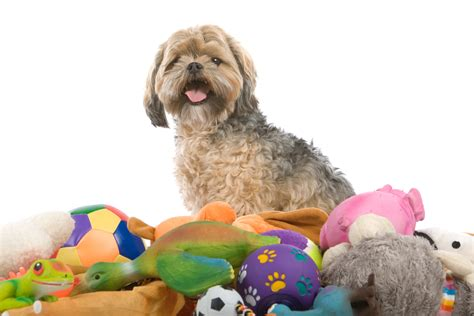 my dog won t come in the house 5 free dog toys you can make from stuff around the house iheartdogs com