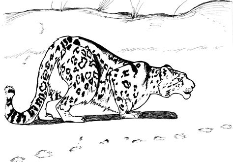 snow leopard cubs coloring pages coloring pages