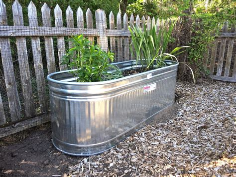 galvanized water tanks as planters garden pinterest