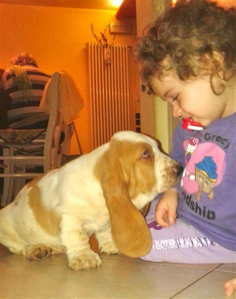 cuccioli in casa basset hound in casa kuorii bassethound