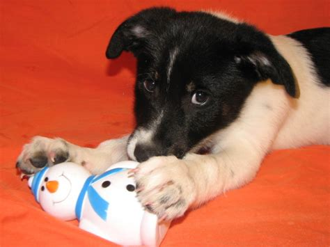 lifeline puppy lifeline puppy rescue s puppies available for adoption photos huffpost