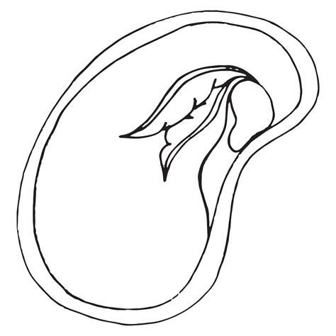 Seed Coloring Page parts of dicot seed coloring pages