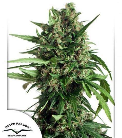 banche semi cannabis taiga 2 zativo