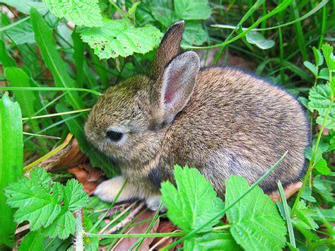 kaninchen tapete hase zucht nagetier garten