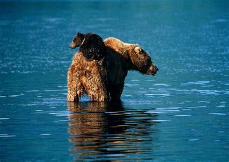 mundo maravilloso el agua un mundo en paz el maravilloso mundo animal