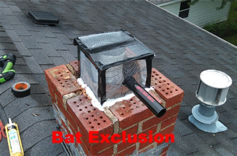 Bats In Fireplace Chimney by Michigan Chimney Bat Removal Eliminate Prevention