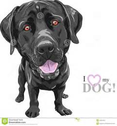 Vector funny cartoon black dog breed labrador retriever stock image