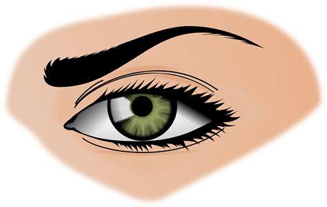 Mata Eyelid Transparant image vectorielle gratuite iris oeil sourcils femmes vert image gratuite sur pixabay 154659