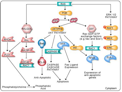 h ras protein ras targeting the undruggable cancer biology