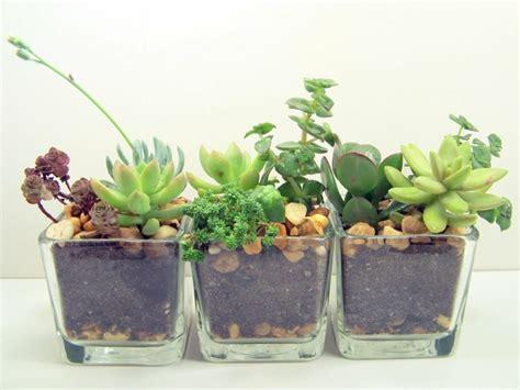 tischdeko pflanzen sukkulenten im glas im blickfang kreative deko ideen mit
