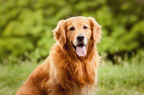 can you use regular shoo on dogs bravecto 112 5 mg
