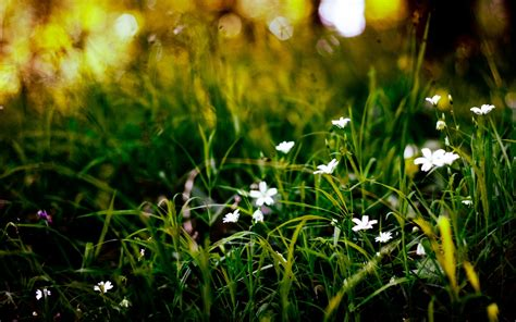 wallpaper grass flower gallery page society of irish foresters society of