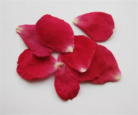 petals for valentines day petals images search