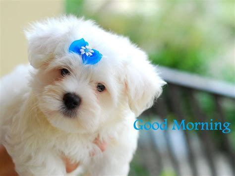 morning puppy morning wishes with dogs pictures images