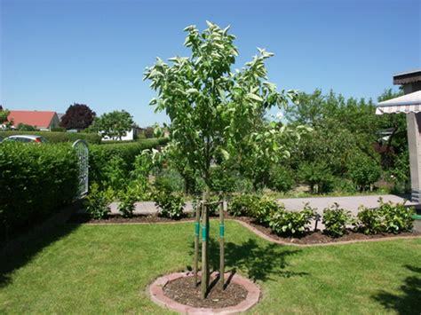 apfelbaum mehrere sorten obstbaeume