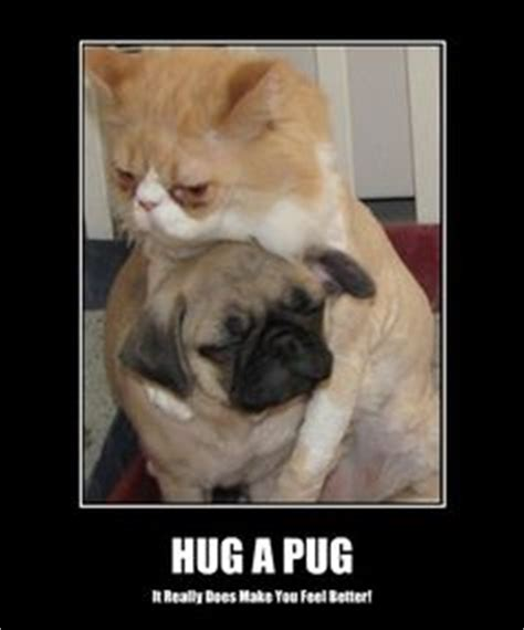 pug child meme 1000 images about pugs on pugs pug and memes