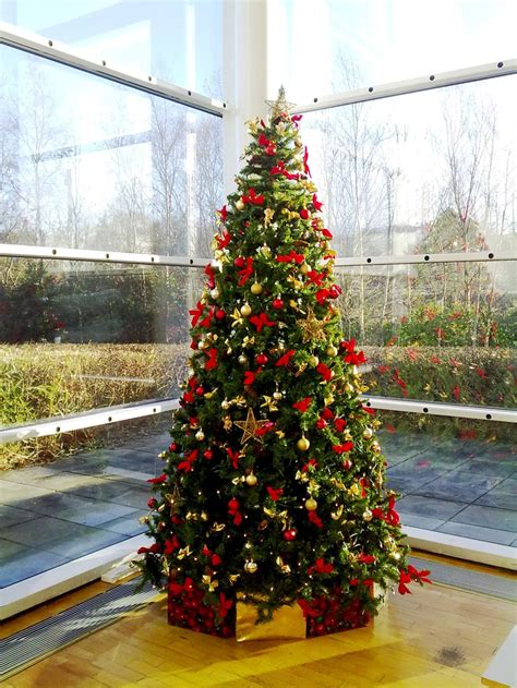 corporate christmas tree hire flowers forever the