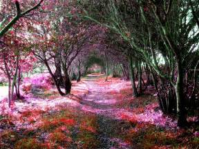 Flower Tunnel by 15 Stunning Tree Tunnels That You Must Visit Let S
