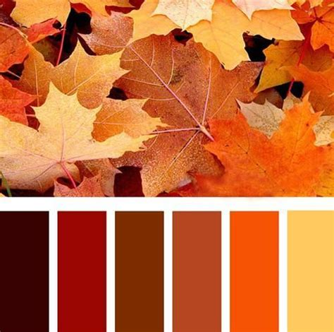 fall color pallette orange color schemes