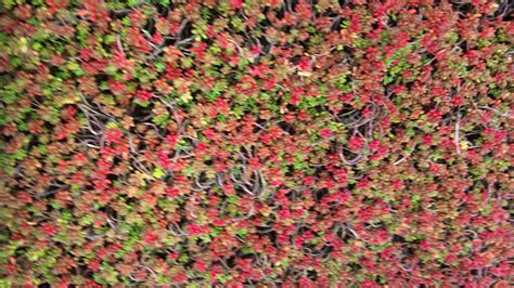 Teppich Koralle by Coral Carpet Related Keywords Suggestions Coral Carpet