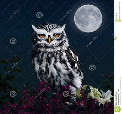 In The Light Of The Moon by Owl In The Light Of The Moon Stock Images Image 30734374
