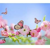 Butterfly Nature Flowers Pink Blossoms