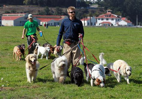 professional walker ky faubion pictures san francisco seeks to license professional walkers zimbio