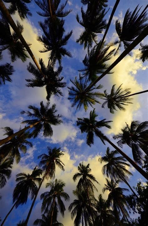 Palm Tree Wallpaper by Palm Trees Backgrounds