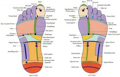 Reflexology And Detoxing by Detox S Care Spa In Edmonton Albertavicky S