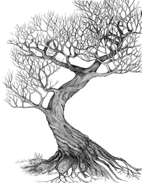 tree drawing 25 best ideas about tree drawings on trees drawing tutorial nature drawing and