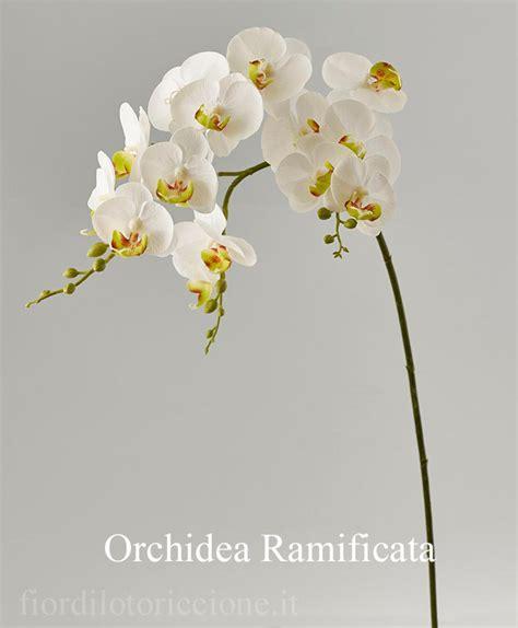 fiori di loto riccione orchidea phalaenopsis fior di loto riccione