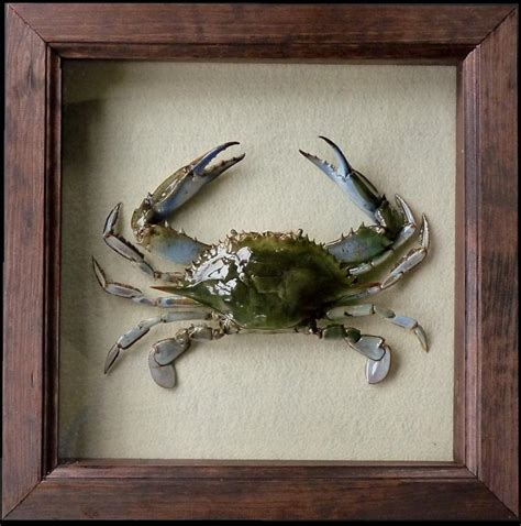 Blue Crab Wall Decor by Pete Miller S Water And Wildlife Studio Blue Crab Wall