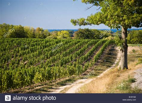 beamsville bench wineries vineyard on beamsville bench niagara peninsula ontario