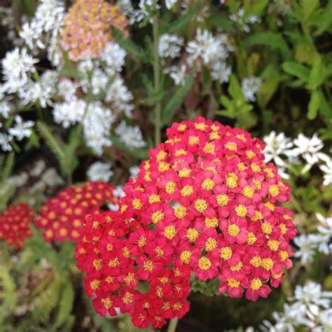 piante x giardino piante da giardino sempreverdi ornamentali e fiorite con