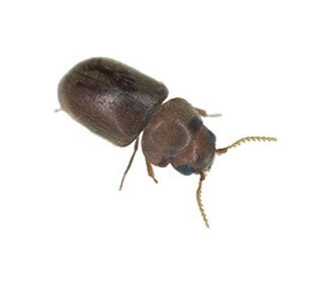 come eliminare le formiche volanti disinfestazione terreni agricoli e allevamenti rentokil