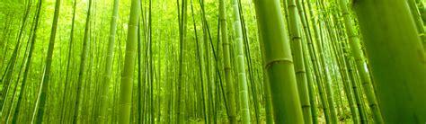 holz fußleisten m 246 bel bambusm 246 bel pflege bambusm 246 bel pflege m 246 bels
