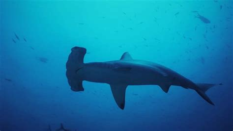 pew research dc floor sharks in the gulf of mexico the facts the pew