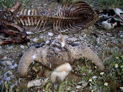 imagenes satanicas fuertes geroa org 187 blog archive 187 segovia encuentran decenas de