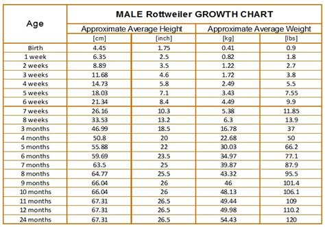 rottweiler growth chart rottweiler size chart dogs our friends photo