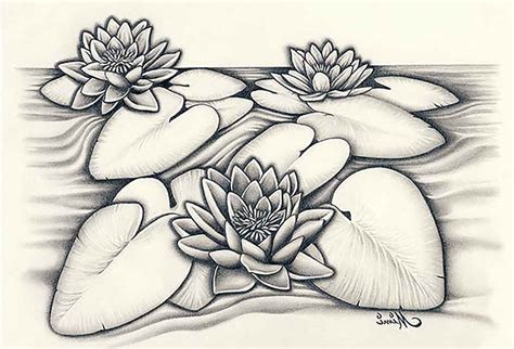 lotus flower drawing images the gallery for gt hibiscus flower outline