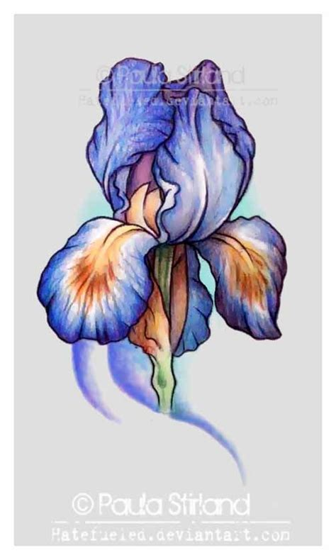 iris flower tattoo designs best 25 iris flower tattoos ideas on